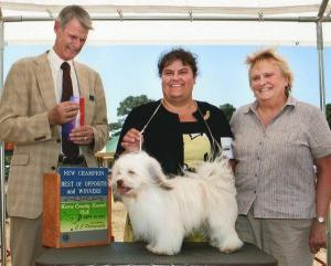 "Havanese ""Big Mac Maverick"" received 2 pt.s to finish his championship. Handled by Anna Faust, assisted by Alethea Faust."