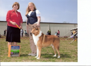 GCH Deep River Crosswind Jake'O Lantern. 2013 #4 Smooth Collie in National Owner Handler Series.